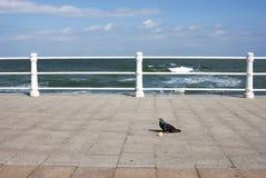 Taube in der Seeseite Stockbild
