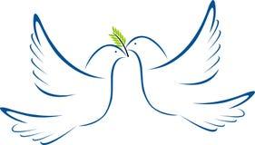 Taube des Weiß zwei Lizenzfreie Stockfotografie