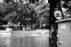 Taube, die auf elektrischen Kasten steht Lizenzfreie Stockfotos