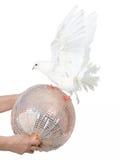 Taube, die mit einer Kugel spielt Lizenzfreies Stockfoto
