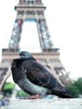 Taube am Eiffelturm lizenzfreie stockfotos