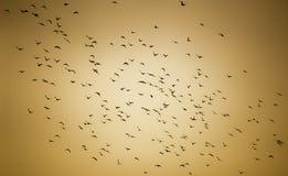 Taube-Fliegen Lizenzfreie Stockbilder
