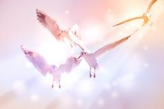 Taube fliegen in die Luft mit den Flügeln, die über blauem Himmel breit sind Stockbild