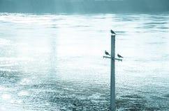 Taube im Mast Stockfotografie