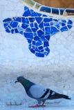 Taube im Park Guell Stockbilder