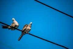 Taube ist ein ture Liebhaber, zwei Vögel sind auf Draht Sie sind Paare Stockbild