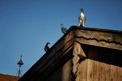 Taube oder Taube auf Dächern Stockfotos