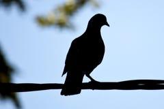Taube ` s Schatten Stockbild