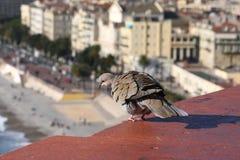 Taube, sitzend auf dem Dach Lizenzfreies Stockfoto