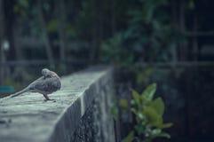 Taube am Zoo lizenzfreies stockbild