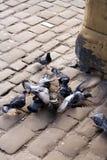 Tauben stockfoto