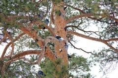 Tauben auf dem Baum Stockfotos