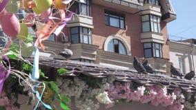 Tauben auf dem Dach stock video