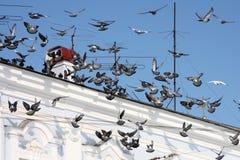Tauben auf dem Dach Stockbild