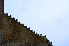 Tauben auf dem Dach stockbilder