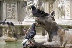 Tauben auf dem Fonte Gaia Brunnen, Siena (Italien) stockfotografie