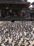 Tauben auf dem zentralen Platz Lizenzfreie Stockfotografie