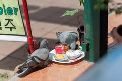 Tauben auf den Straßen von Pattaya, Thailand vom Abflussrinnenkussreis stockfotografie