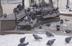 Tauben auf der Bank stockfoto