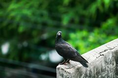 Tauben auf der Wand als Hintergrund Stockfotografie