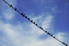 Tauben auf Draht Lizenzfreies Stockbild