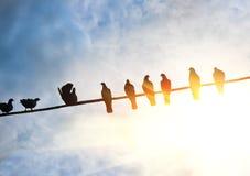 Tauben auf Draht Lizenzfreie Stockbilder