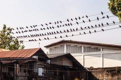 Tauben auf Draht Stockfotos