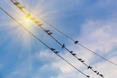 Tauben auf Draht Stockfoto
