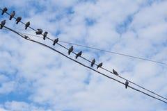 Tauben auf Draht Stockbilder