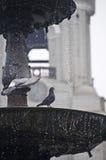 Tauben auf einem Brunnen Stockbild