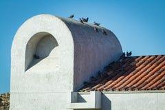 Tauben auf einem Dach stockfoto