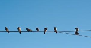 Tauben auf einem Draht Stockfoto