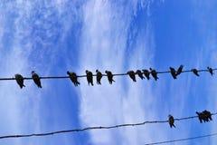 Tauben auf einem Kabel Stockfotografie