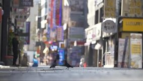 Tauben auf einer Einkaufsstraße Seouls stock video footage