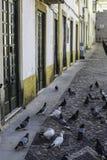Tauben auf einer Straße Lizenzfreie Stockfotografie