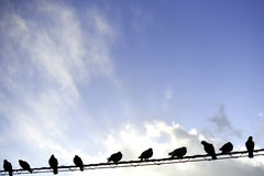Tauben auf elektrischem Draht Stockbilder