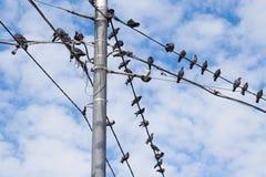 Tauben auf elektrischem konkretem Pfosten Lizenzfreie Stockfotos