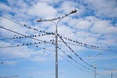 Tauben auf elektrischem Pfosten Lizenzfreies Stockfoto
