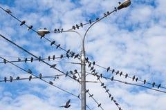 Tauben auf elektrischem Pfosten Stockbild