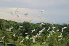 Tauben auf Flug Lizenzfreies Stockfoto