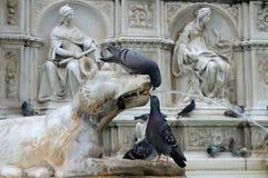 Tauben auf Fonte Gaia (Siena) stockbilder