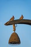 Tauben auf Straßenlaterne bei Sonnenaufgang Lizenzfreies Stockbild