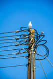 Tauben auf Strom Stockbilder