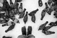 Tauben auf weißem Schnee in der Stadt Lizenzfreie Stockfotos