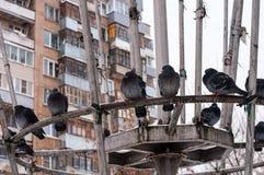 Tauben auf weißem Schnee in der Stadt Stockfotos