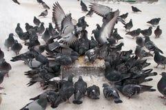 Tauben auf weißem Schnee in der Stadt Lizenzfreie Stockbilder