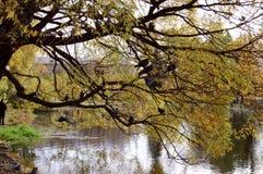 Tauben auf Zweigen Stockfotografie