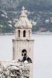 Tauben in der Liebe Lizenzfreie Stockfotos