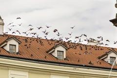 Tauben, die über das alte Ziegelsteindach, eines Gebäudes im alten Schleppseil fliegen Stockbilder