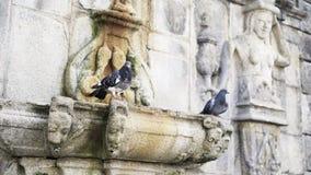 Tauben, die auf Braue der Kathedrale sitzen stock footage